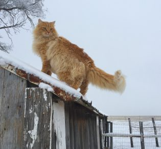 Wendy Bullard — Cat On A Cold Tin Roof