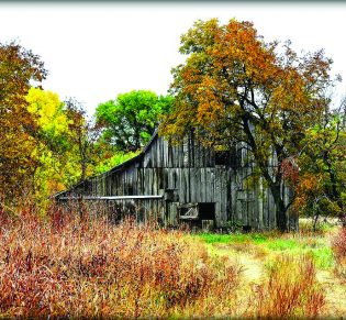Judy Moore — Old Barn