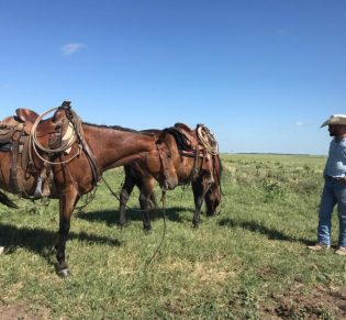 Skt News Article July 2020 Featured Image Rosalia Ranch Horses