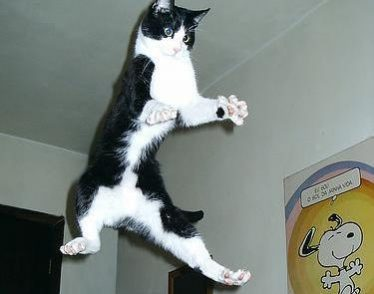 Jumping Cat A