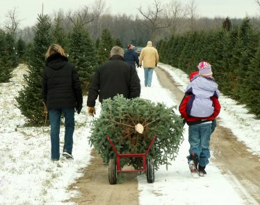 Family Pulling Christmas Tree